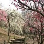 【はなぶん梅日和】Instagramフォトコンテスト開催! 2/16(火)~3/14(日)