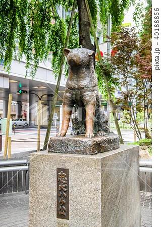 東京渋谷 忠犬八公像の寫真素材 [40188856] - PIXTA