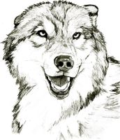 Wolf Pack by Kerong on DeviantArt