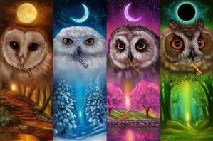 Cute Barn Tyto Owl Wallpaper Barnowl Deviantart