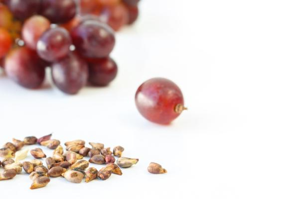 Germinate grape seeds: how to do it and care - How to germinate grape seeds step by step