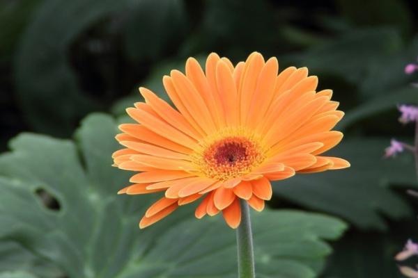 9 Orange Flowers - Orange Flower Gerbera