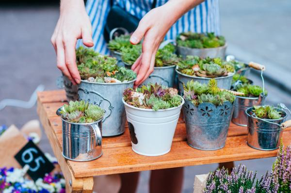 Succulent care - Substrate and compost for succulents