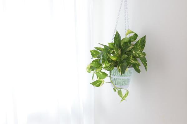 Indoor green plants - Poto