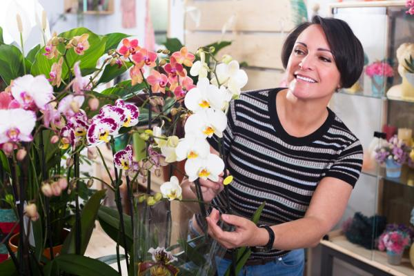 Phalaenopsis orchid: care - Characteristics of the Phalaenopsis orchid