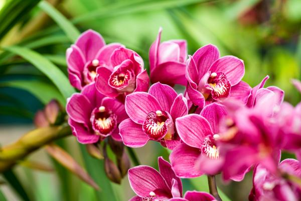 Orchid Bloom - When Orchids Bloom