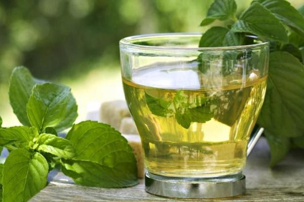 How to care for peppermint - How to use the peppermint that you plant at home