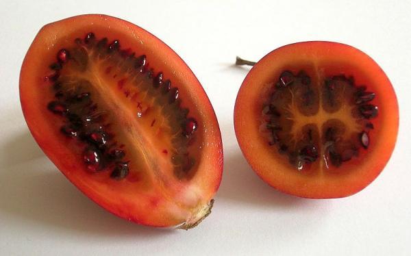 Tree Tomato Growing - How To Sow Tree Tomato Seeds