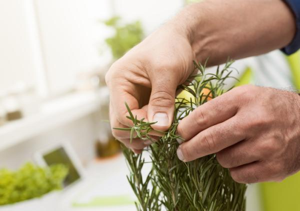 How to care for a potted rosemary plant - Pruning rosemary and possible pests