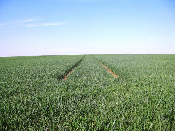 What is monoculture - What is monoculture - definition
