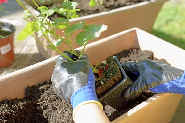 How to grow plants faster - transplanting plants to grow better