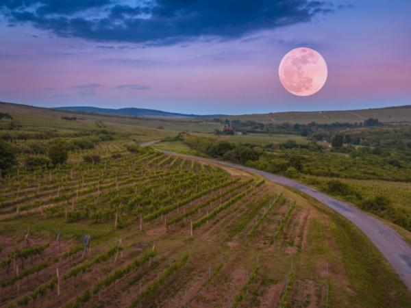 What is the influence of the phases of the moon on agriculture - How to take advantage of the full moon for agriculture