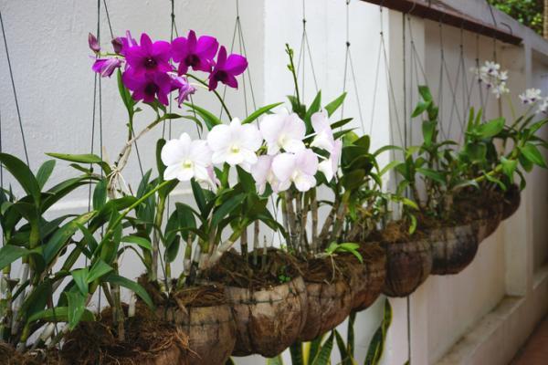 29 Indoor Hanging Plants - Hanging Orchids