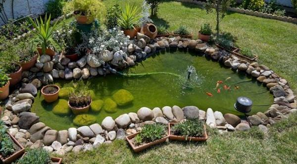 Solutions against green water in ponds - Causes