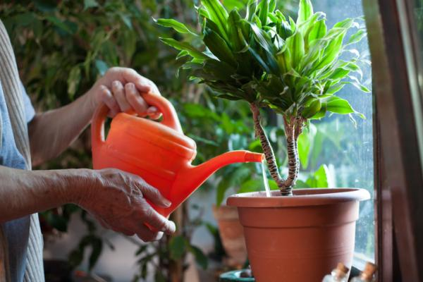 Vinegar for plants: benefits and how to use it - Benefits of vinegar for plants