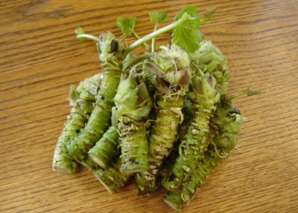 Tubers: what they are and examples - Wasabi, a spicy tuber