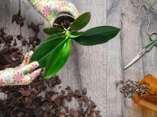 Compost for orchids: how to do it - Type of orchid compost - what is it like?