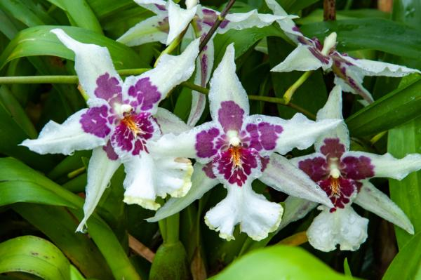 12 types of orchids - Cambria Orchid
