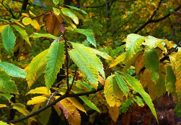 Chlorosis in plants: what it is and how to eliminate it - Chlorosis in plants: symptoms