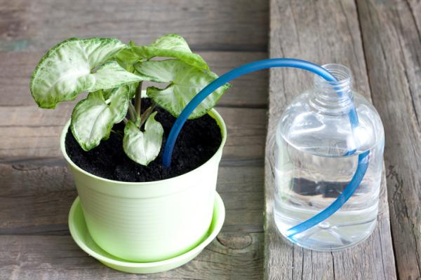 How To Make A Homemade Drip Irrigation System - The Drip Irrigation System