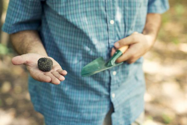 How to grow truffles - What are truffles and what is truffle farming