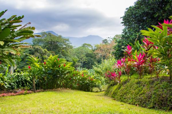 11 types of gardens - Tropical garden