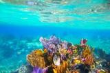 Mayan Riviera reef snorkel underwater coral paradise - 33819020