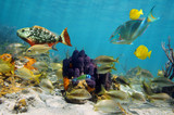 Colorful sea life - 53159482