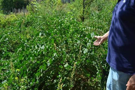 نبتة الكبار فياغرا مجهولة تجذب الأجانب وتشغل المغاربة