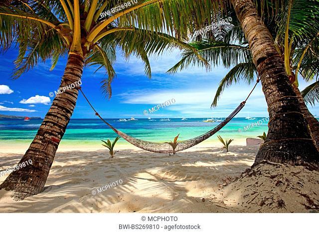 hammock between palm tree