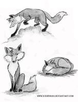 Winter Foxes by Andagora on DeviantArt