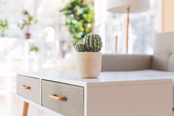 Where to place cacti according to Feng Shui - Do cacti bring good luck or bad luck according to Feng Shui?
