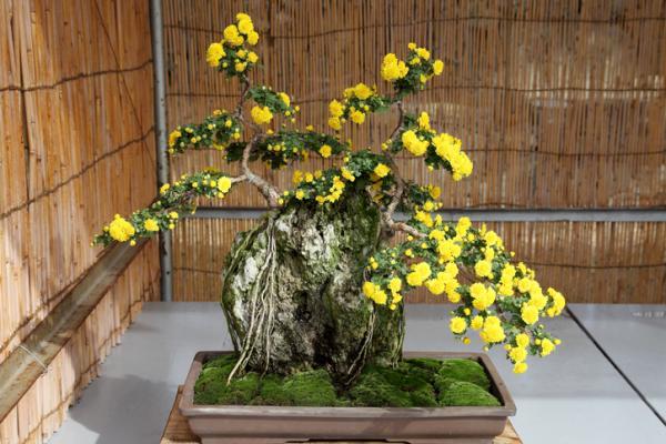 19 types of bonsai - Ishitsuki