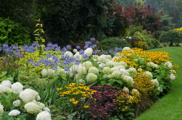 Ornamental plants: what are they, types, names and images - What are ornamental plants