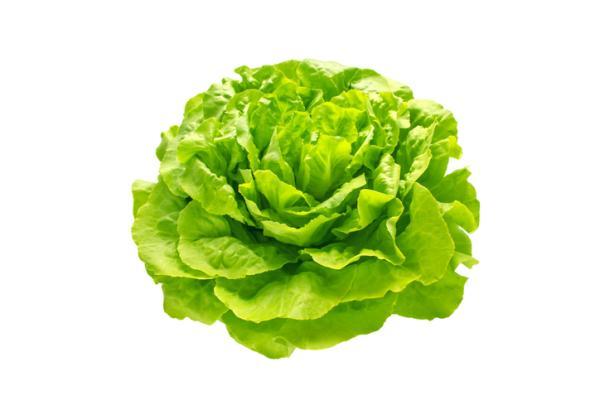 14 types of lettuce - French lettuce