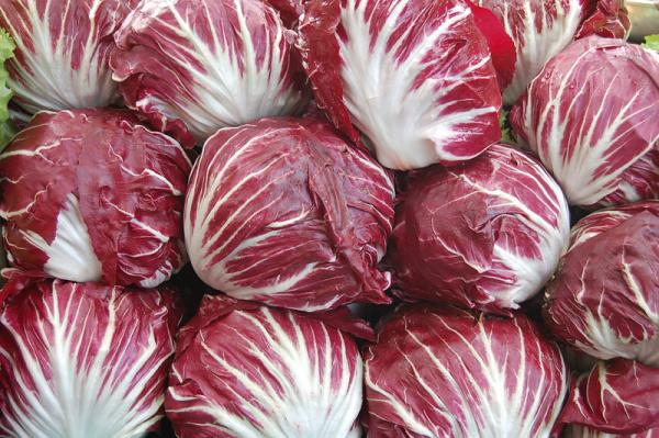 14 types of lettuce - Radicchio