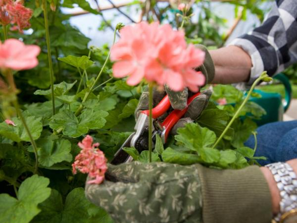 How to grow plants faster - Prune plants to grow faster