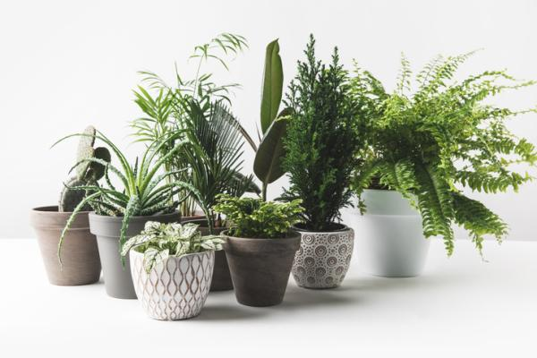 Types of Large Indoor Plants - What Differences Are Between Large and Small Indoor Plants