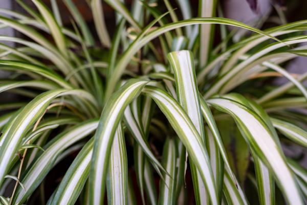 Heat Absorbing Plants - Tape