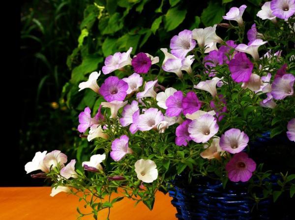 29 Indoor Hanging Plants - Petunias