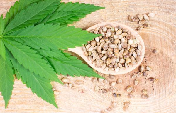 Types of marijuana seeds and names - Main types of marijuana seeds