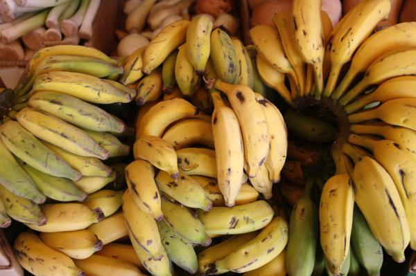 Types of Bananas - Cavendish