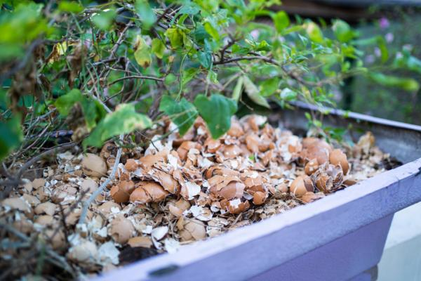 Eggshell for plants: what it is for and how to use it - What is the eggshell for on plants