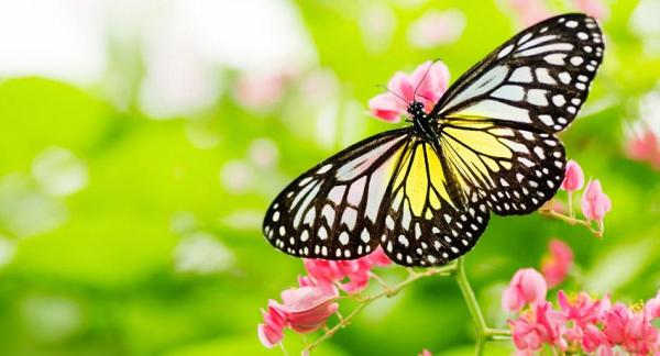 Turn a garden into a biodiversity paradise - An ecosystem in balance