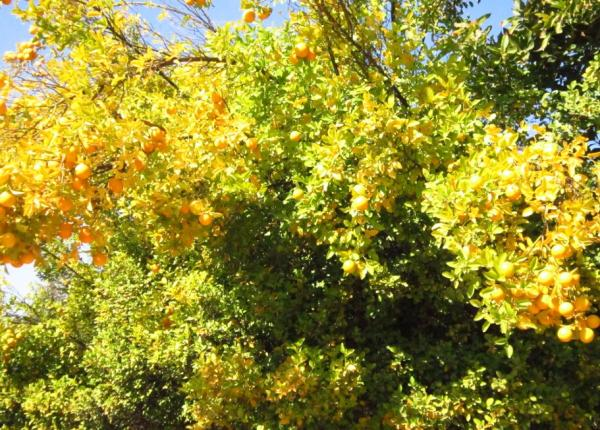 Chlorosis in plants: what it is and how to eliminate it - Chlorosis in plants: what it is and causes