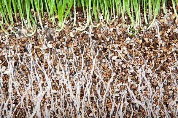 Vermiculite: what it is, uses and how to make it - Uses of vermiculite