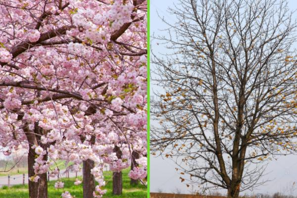 Types of trees - Types of deciduous trees