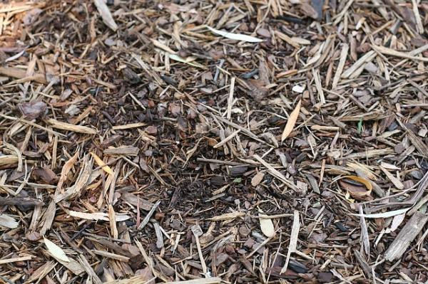 How to make a mulch for plants or mulching - What is mulching or mulch for plants and its benefits