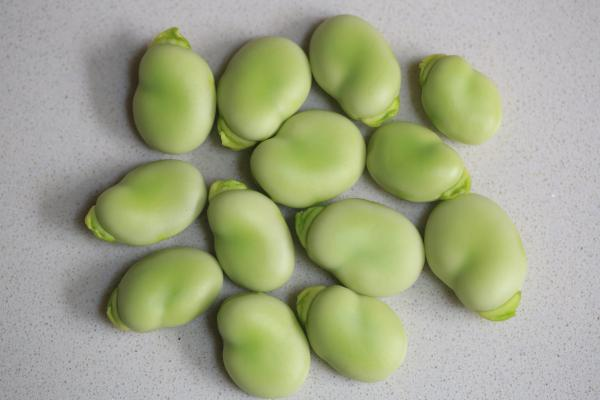 Types of legumes - Broad beans