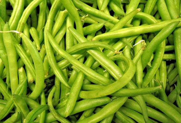 Types of Legumes - Green Beans